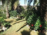 Green garden with palm trees