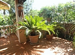 Exotic plants on the terrace